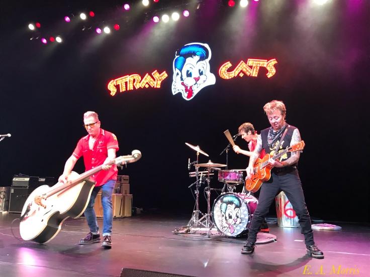All 3 Stray Cats I.jpg